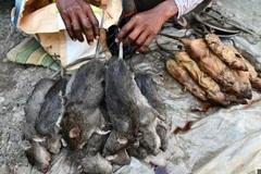 Ở nơi thịt chuột được coi là đặc sản 'tuyệt đỉnh kungfu' còn phổ biến hơn gà hay lợn