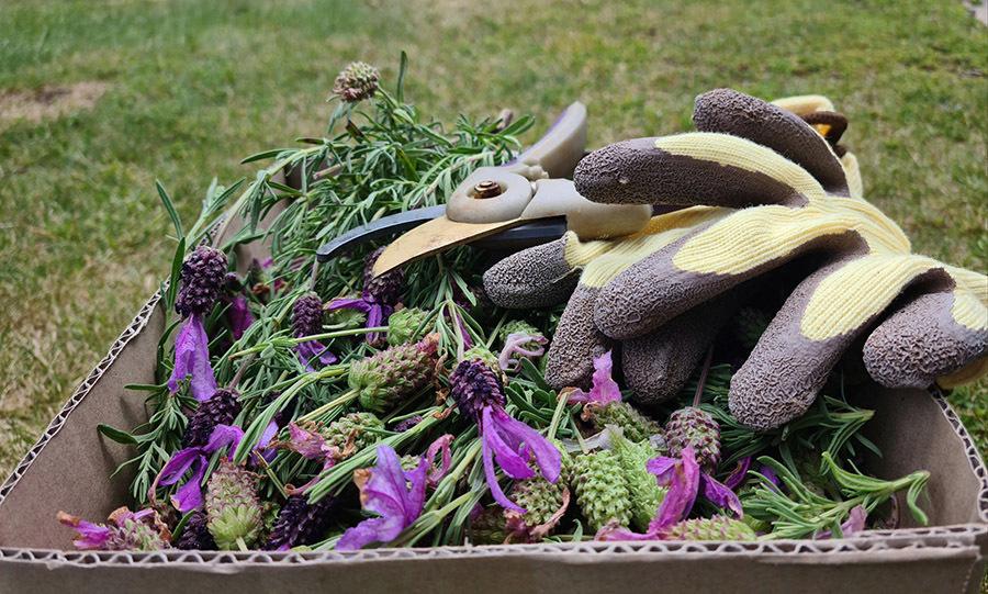 Khu vườn 700m2 hoa nở quanh năm của cô dâu Việt tại Úc