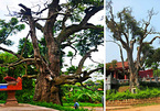 Trees thousands of years old – treasures beyond price