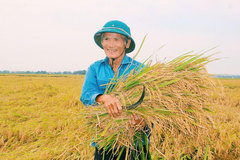 Rice exporters have bumper year, VN becomes No 1 in the world