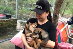 Woman in Da Nang runs shelter for homeless dogs and cats