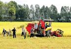 Bỉ hỗ trợ sản xuất lúa bền vững ở đồng bằng sông Cửu Long
