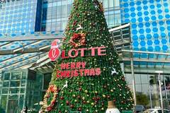 "Close-up of ""giant"" Christmas trees in Hanoi"
