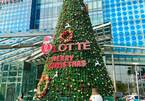 """Close-up of """"giant"""" Christmas trees in Hanoi"""