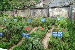Phát huy hiệu quả vườn thuốc nam tại các trạm y tế xã