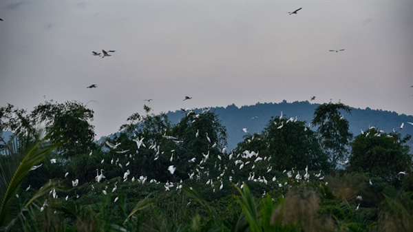 Thanh Hoa farmer protects wild birds with his love
