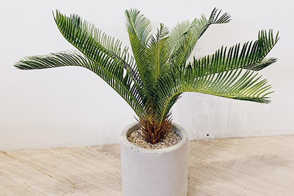 Muốn sinh vượng hoặc hoá sát, nên trồng cây ở ban công