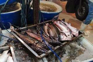 Nguồn gốc cá tầm nhập khẩu rẻ không ngờ bày bán khắp chợ