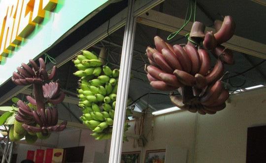 5 giống chuối nổi tiếng Việt Nam: Có loại xấu chưa từng có nhưng ăn lại cực ngon