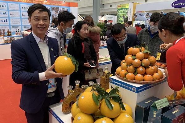 Ông nông dân diện comple, giày bóng loáng bán 1.000 tấn cam không cần ra chợ