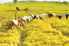 Hi-tech application - a key to promote agriculture sector
