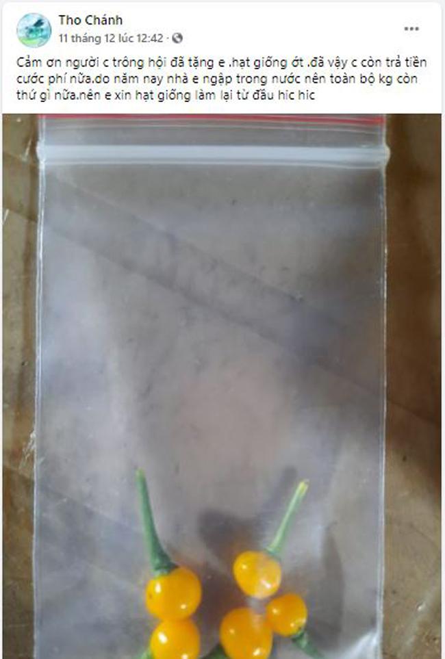 Bất ngờ loại ớt đắt nhất thế giới giá nửa tỷ một kg được người Việt đem tặng miễn phí