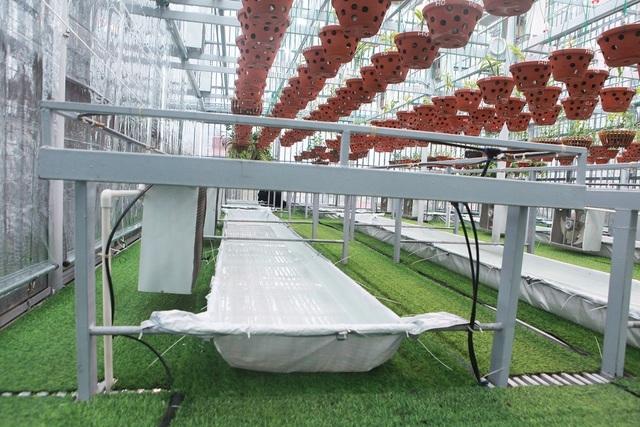 Lặng ngắm giàn lan đột biến 'khủng' được làm từ 30 tấn thép trên sân thượng