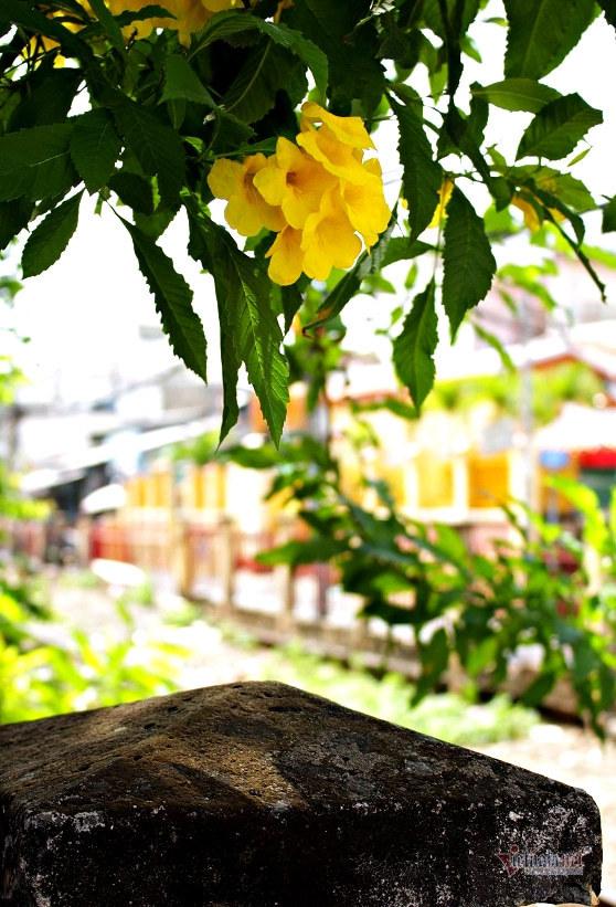 Hoa huỳnh liên nở vàng rực