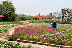 Ho Tay Flower Valley: An ideal venue to take photos in Hanoi