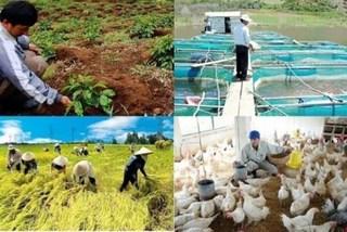 Hình thành các liên hiệp HTX để cải thiện cuộc sống của hộ cá thể và nông dân