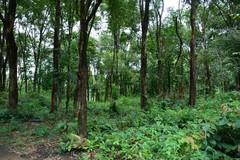 Phát triển bền vững vốn rừng hiện có