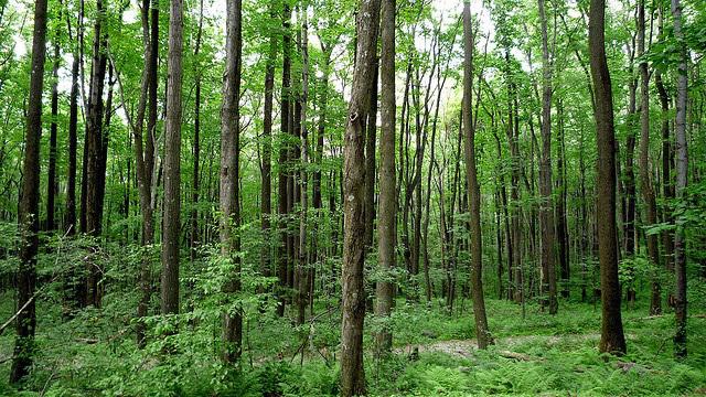 Thống kê tỷ lệ che phủ rừng: Ước năm 2020 đạt khoảng 42%
