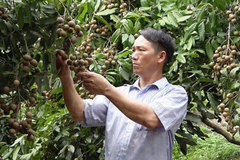 Ethnic minority farmer in Ha Giangfinds way to escape poverty
