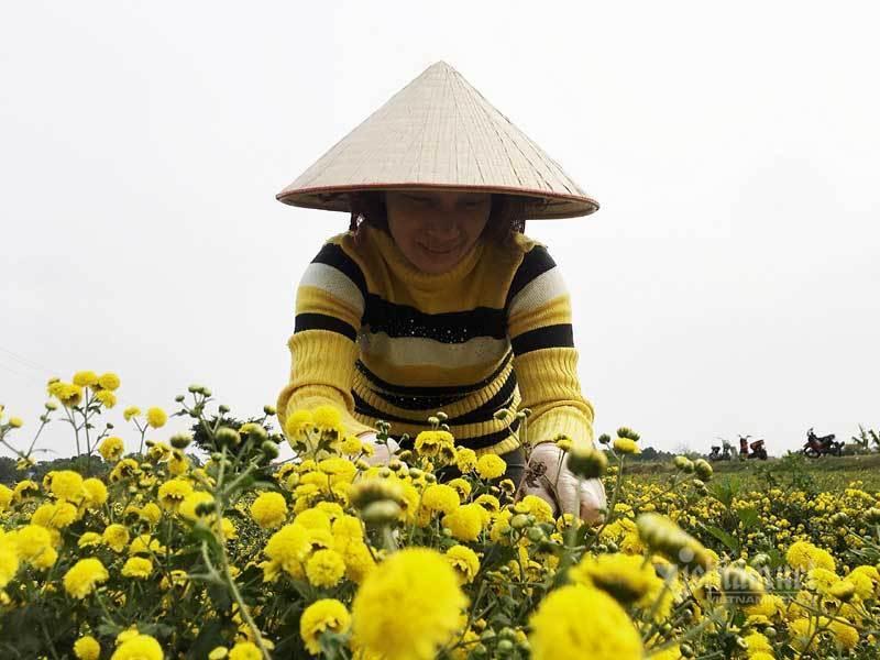 Suốt cả thế kỷ chỉ trồng một loại hoa, cả làng đều đặn thu tiền tỷ