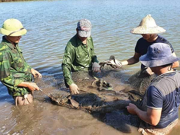 nam dinh,rural development,vietnam agriculture,farm produces