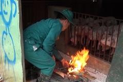 Chủ động các giải pháp đảm bảo an toàn cho vật nuôi vụ đông xuân