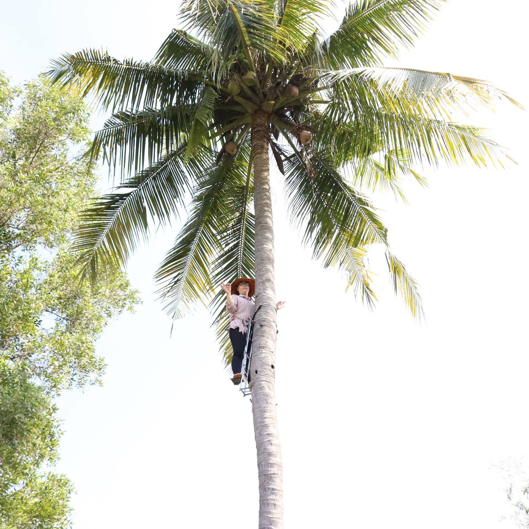 Một ông nông dân tỉnh Đồng Nai sáng chế thiết bị leo hái dừa trông rất ngầu, đàn bà con gái cũng leo nhoay nhoáy