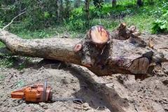 Gia Lai tăng cường các giải pháp ngăn chặn, phát hiện các vụ việc vi phạm, xâm hại đến tài nguyên rừng