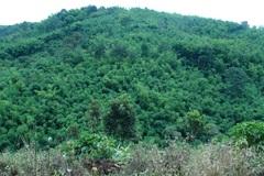 Hưởng lợi từ chính sách bảo vệ và phát triển kinh tế rừng