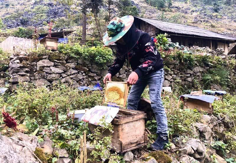 Đặc sản cao nguyên đá: Mật ong bạc hà xịn, tiền triệu vẫn khó mua