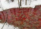 Sông đỏ thẫm xuất hiện giữa rừng tuyết, Nga vội vã điều tra