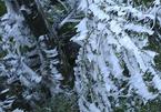 Miền Bắc có nơi rét 0 độ, khả năng xảy ra mưa tuyết dịp Tết Dương lịch