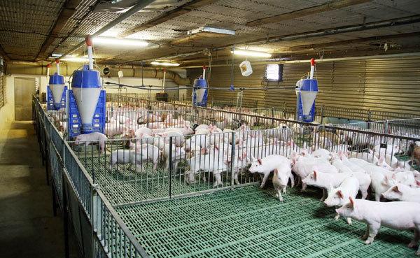 Quảng Bình: Khuyến khích đầu tư ứng dụng công nghệ cao vào sản xuất nông nghiệp