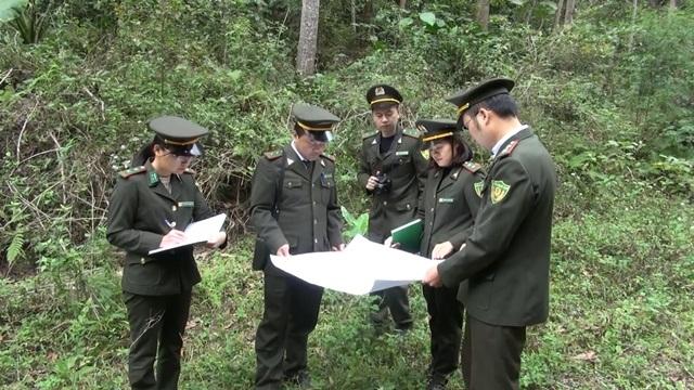 Cho thuê đất: Chính sách hiệu quả trong bảo vệ rừng