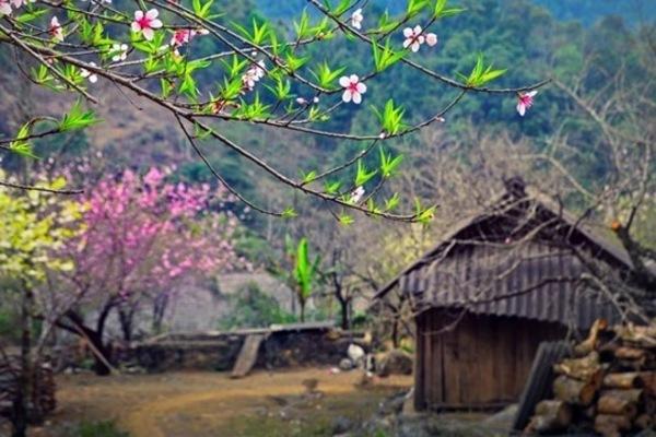 Huyện ở Sơn La họp khẩn hướng dẫn các xã miền núi trồng đào rừng