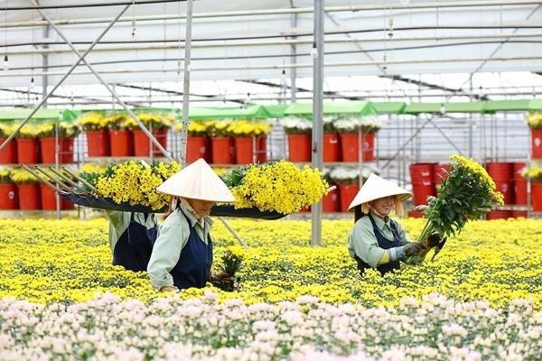 Số liệu thống kê: Nhiệm kỳ qua tỉnh Lâm Đồng phát triển mới trên 4.000 doanh nghiệp