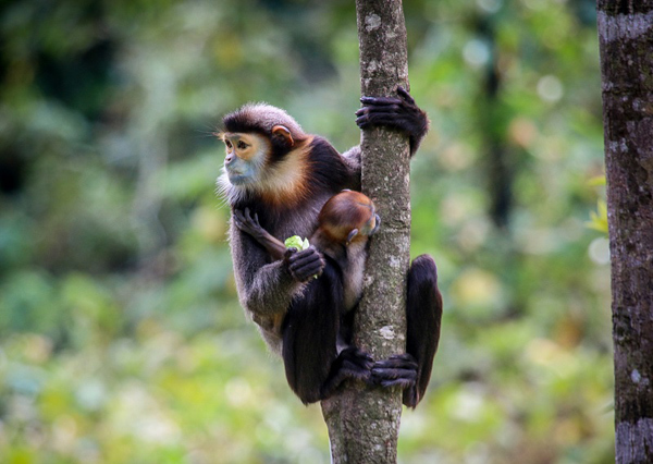'Bách khoa hoang dã' đặc biệt ở Việt Nam