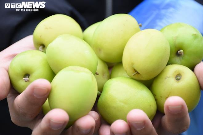 Đặc sản táo muối Hải Phòng 'cháy hàng', dân thu cả trăm triệu