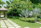 Những loại cây cát tường nên trồng ở sân nhà