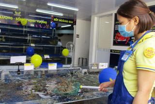 Tôm hùm tăng giá gấp 2-3 lần, cửa hàng mong khách 'thông cảm'