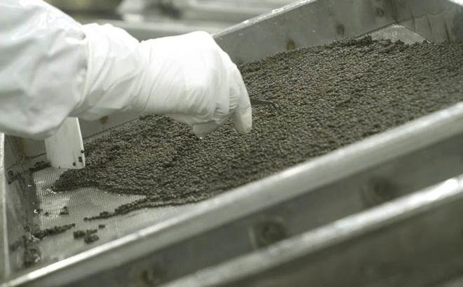 Lệnh cấm của Mỹ vô tình giúp ngành 'vàng đen' của TQ bùng nổ mạnh, tham vọng đáp ứng nhu cầu toàn thế giới