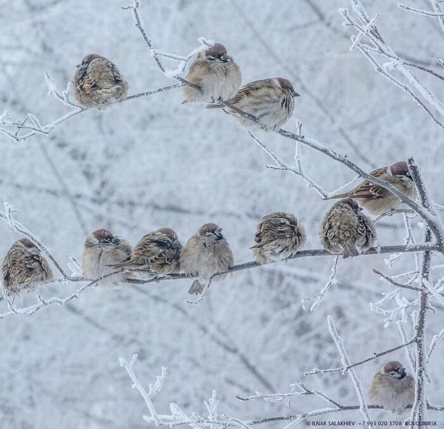 Những cảnh tượng chỉ xuất hiện ở nơi lạnh sâu tới -40 độ C
