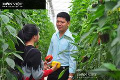 Giá ớt tăng cao, một ông nông dân 'tay ngang' tỉnh Lâm Đồng mỗi tháng cắt bán 50 tấn ớt, doanh thu 1,5 tỷ đồng