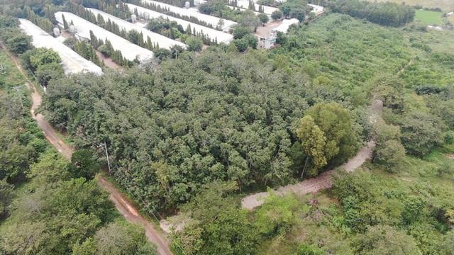 Đại gia chơi lớn, bỏ 30 tỷ đồng mua đất sân bay Long Thành làm nhà vườn