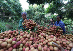 Vietnam heads towards modern, integrated agriculture