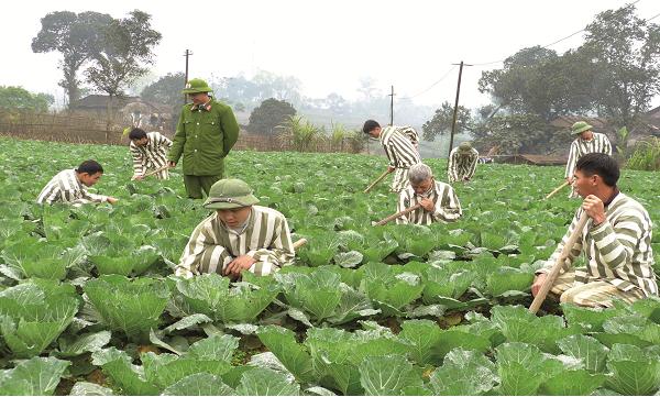 Phạm nhân lao động, sản xuất: Bước đệm hoàn lương, tái hoà nhập cộng đồng