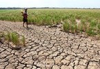 Climate Change: Vietnam's strong political commitment to protection of human rights