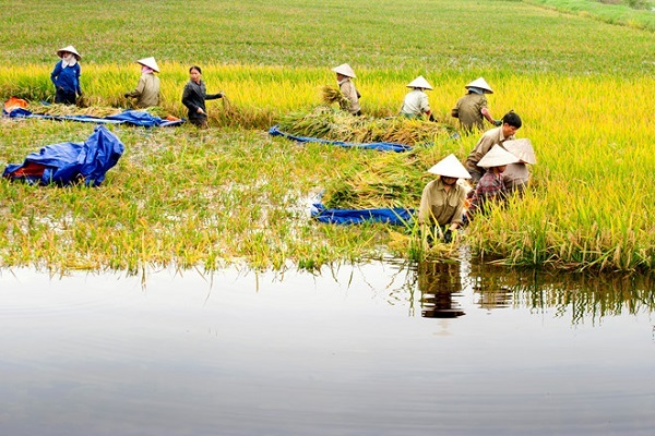 Thành tựu xóa đói giảm nghèo - minh chứng sinh động đảm bảo quyền con người của Việt Nam