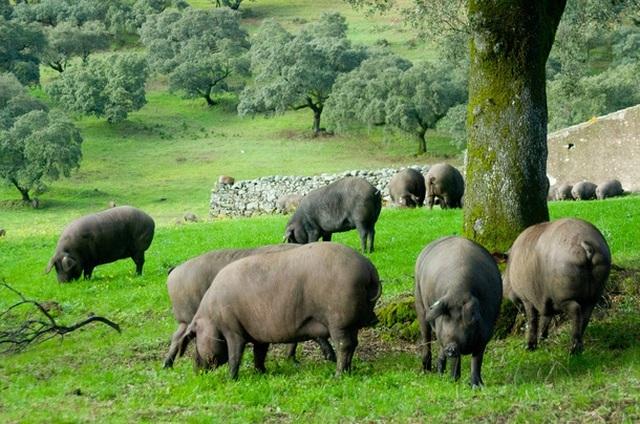 Nhận thù lao hơn 90 triệu cho việc thái thịt đùi lợn 'mỏng tang như lá lúa'