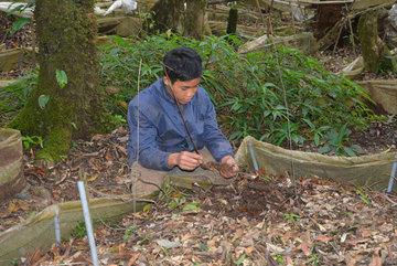 Gia tài tiền tỷ ủ dưới lớp đất đen thẫm nơi rừng già ở Kon Tum